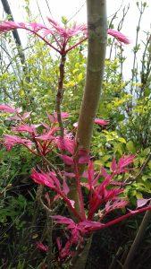 arbres_et_arbuste_3