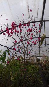 arbres_et_arbuste_4